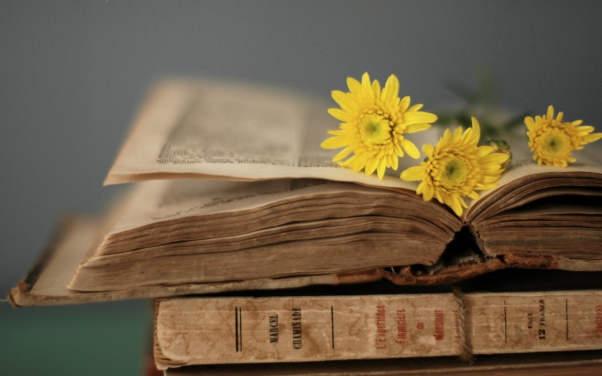 Yellow-flowers-on-the-old-book